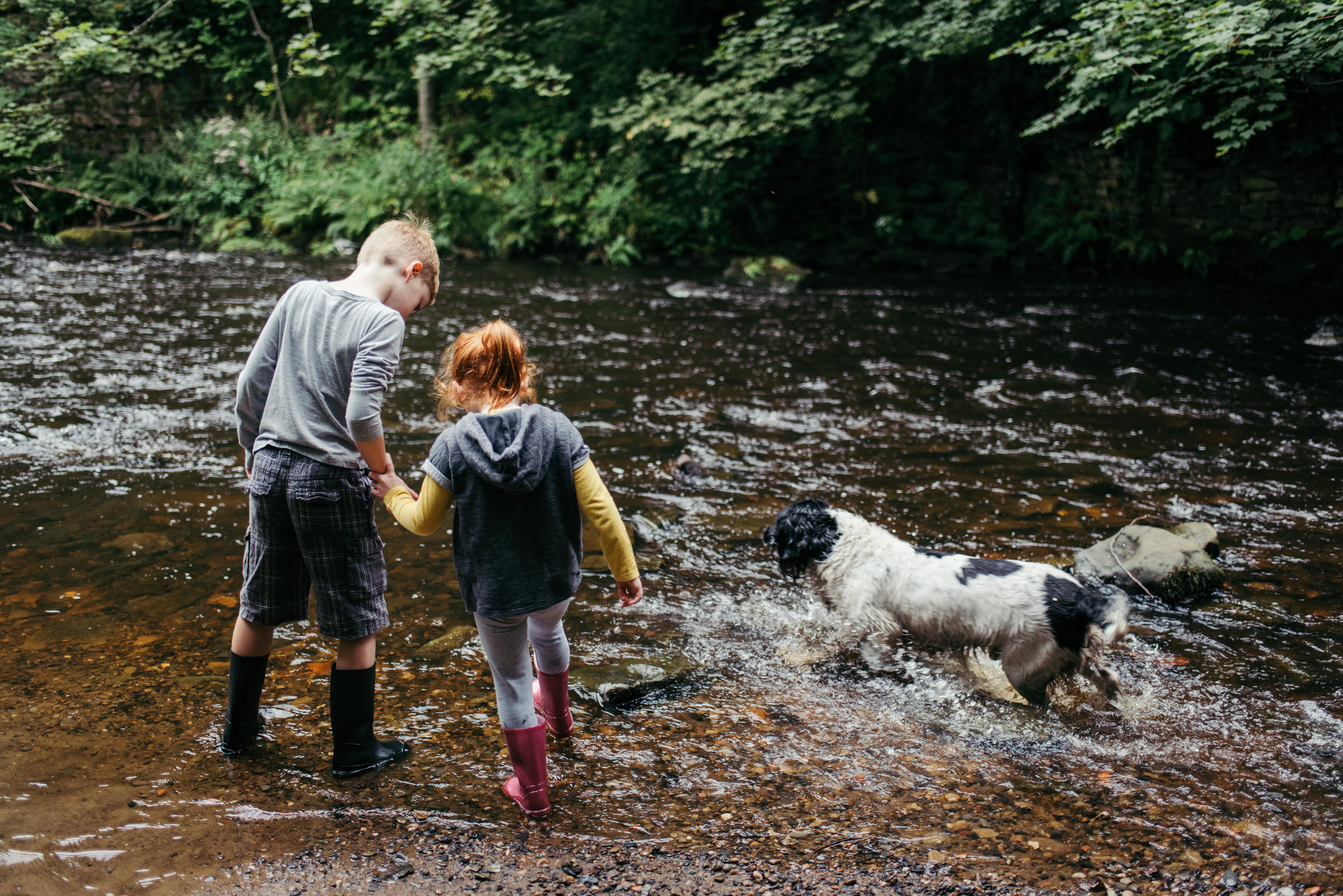 Dog Walking Prices Derbyshire